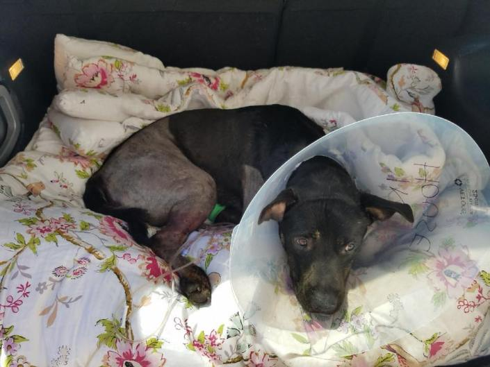 Officers tended to dog hit by car and left for dead