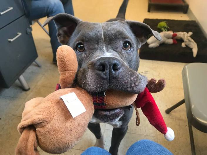 Senior dog left homeless