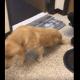 Puppy transformed