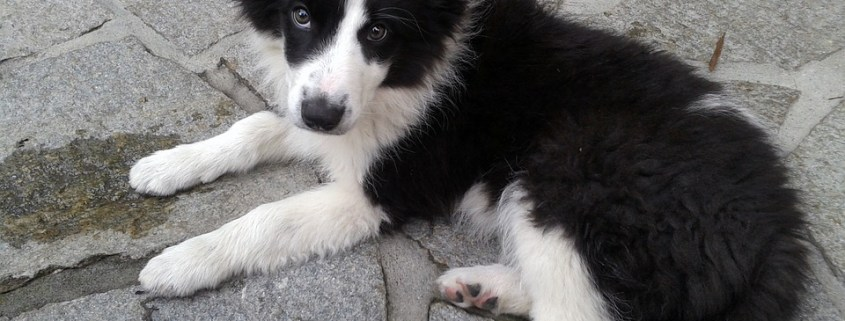 Veterinarian accidentally euthanized puppy