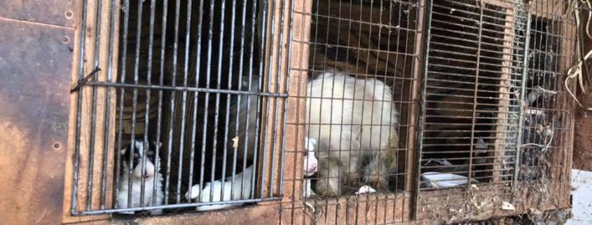 Puppy mill raid