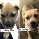 puppy won't be returned to owner who allegedly abused him
