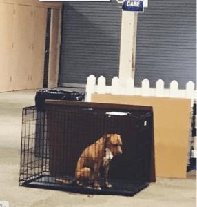 Sad dog sits alone after adoption event