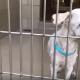 Senior dog is so confused after adopter returned him