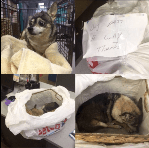 Bagged dog left for dead with a note