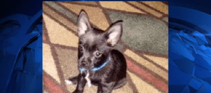 Stolen dog Clyde