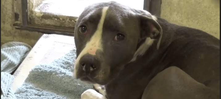 Surrendered by owners - did they know she may die?