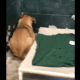 Surrendered dog shakes in fear