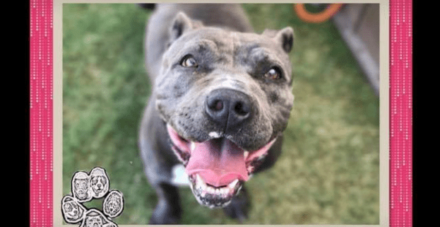 What is known about dog found near death, dumped 2 wks after adoption
