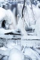 Luontokuvaus valokuvaaja Petri Jauhiainen