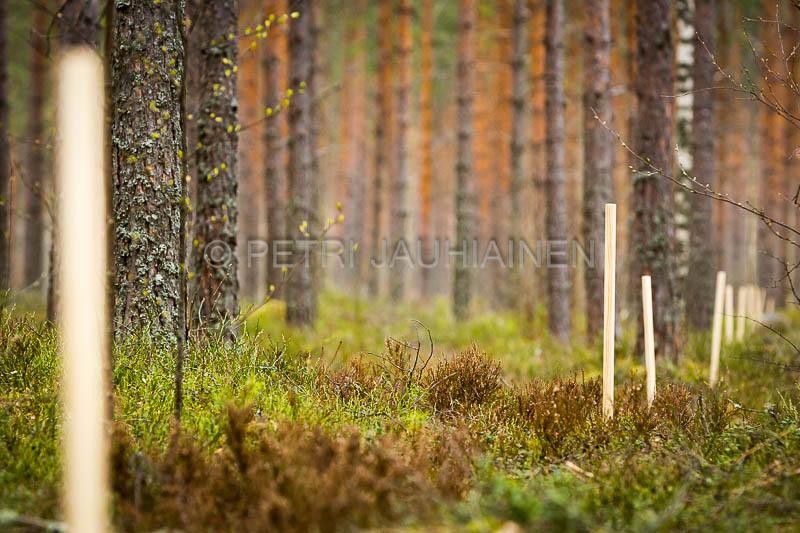 petri-jauhiainen_valokuvaaja_valokuvaus_kuopio_pohjois-savo_fotographer_fotography_vehmersalmi-kuopio_140509-4