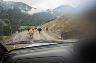 Stejně jako v ČR se i tady na silnici pohybuje rozličný dobytek...