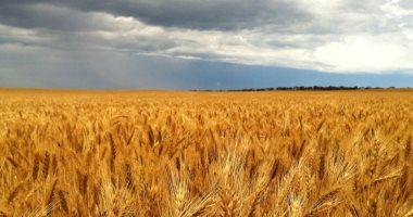 Photo of إيران توقع مذكرات تفاهم لاستيراد القمح من روسيا وكازاخستان