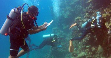 """غرفة الغوص: مراكز الغوص تخضع لإشراف """"السياحة"""" ونطبق أعلى معايير السلامة"""