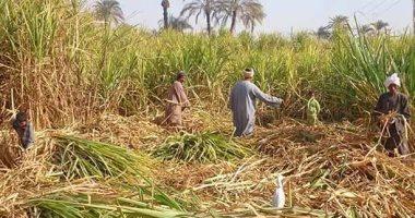 Photo of تراجع استيراد السكر بنسبة 26% بسبب زيادة الإنتاج المحلى