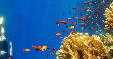 تقرير: مصر أحد أفضل الوجهات السياحية بالنسبة للسائح التشيكى