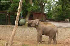 Słonie ZOO (1)