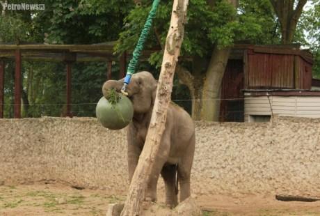 Słonie ZOO (5)