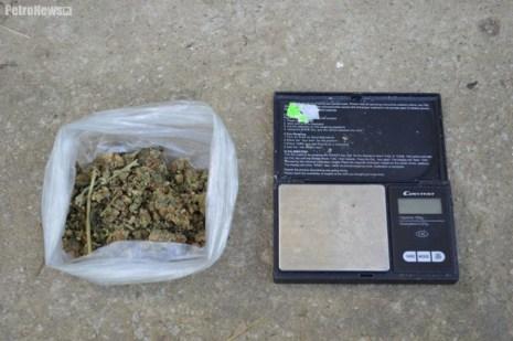 Narkotyki Plantacja (1)