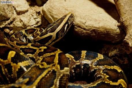 Węże (13)