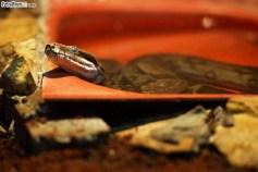 Węże (5)