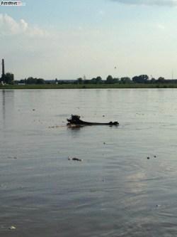 Rzeka Wisła (5)