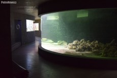 Fot. Zoo Płock