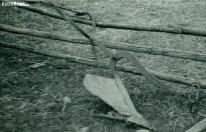 Redlica (obsypnik do ziemniaków) lata 1948-1954
