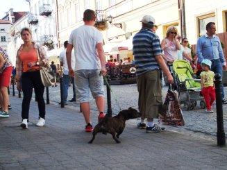 Fot. Grzegorz Gętka, Ulica Grodzka w fotografii codziennej