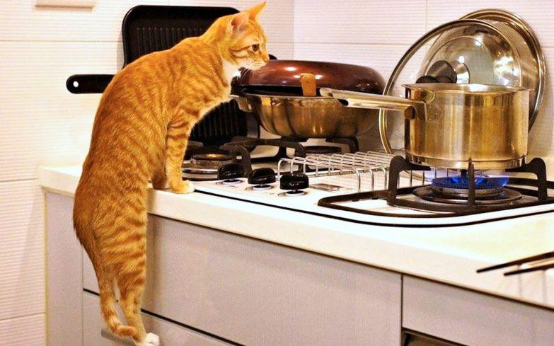 Котенок лазает на стол что делать. Как отучить кошку лазить на стол. Как отучить лазить кота на стол