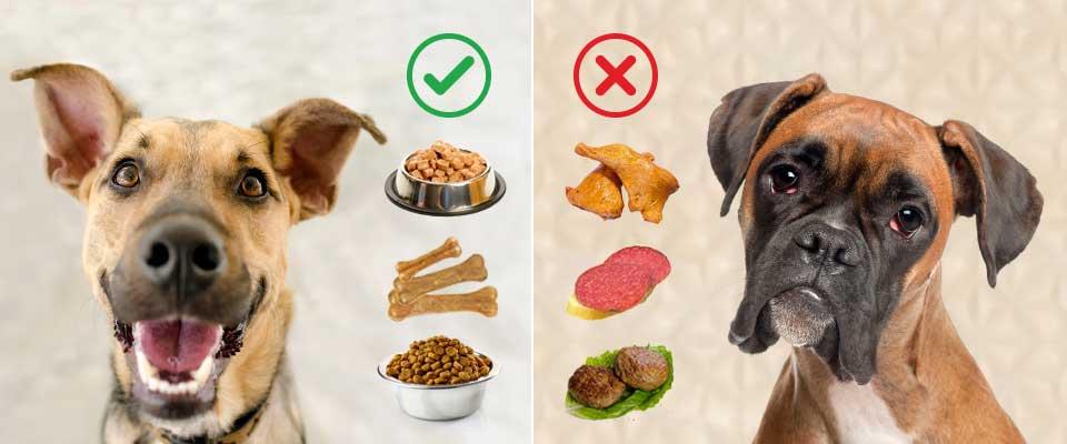 Почему собака ест кошачьи экскременты