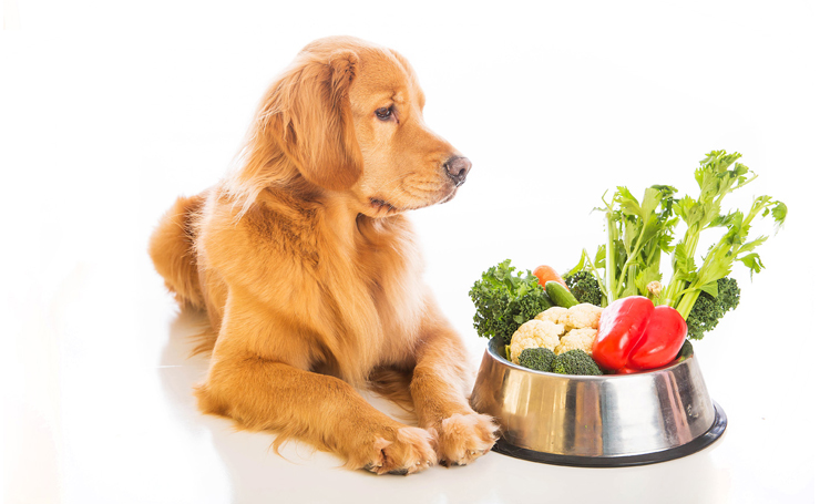 Nutrition and caring for a dog must correspond to its age category