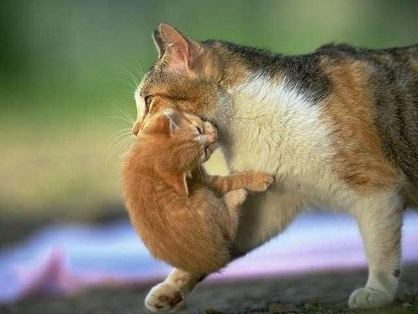 Почему кошка тащит котят в кровать. Почему кошка таскает котят