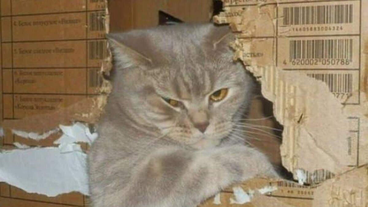 Очень милые и наглые коты: в этих фото вы узнаете своих ...