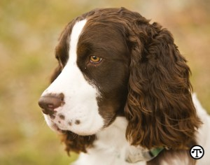 Experts say that liver disease can affect pets of any age. Diagnosing it involves an examination and labwork plus, potentially, X-rays and an ultrasound.