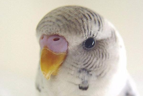 Красивые и оригинальные клички и имена для попугаев: для ...