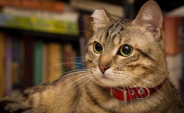 Наружные паразиты у кошек: описание, виды, симптомы ...