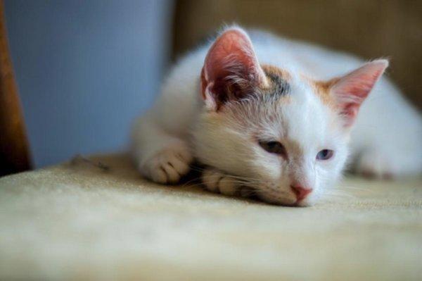 Внутренние паразиты у кошек: описание, виды, симптомы ...