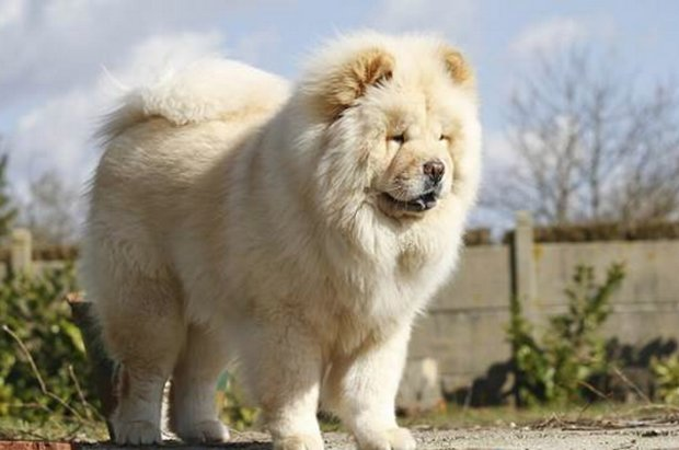 Anjing Termanis Anjing Terindah Di Dunia Parade Martabat Kemewahan Dan Kelembutan