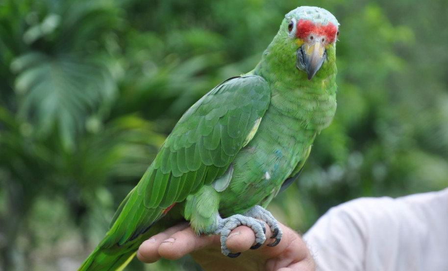 Самые крупные попугаи на планете фото