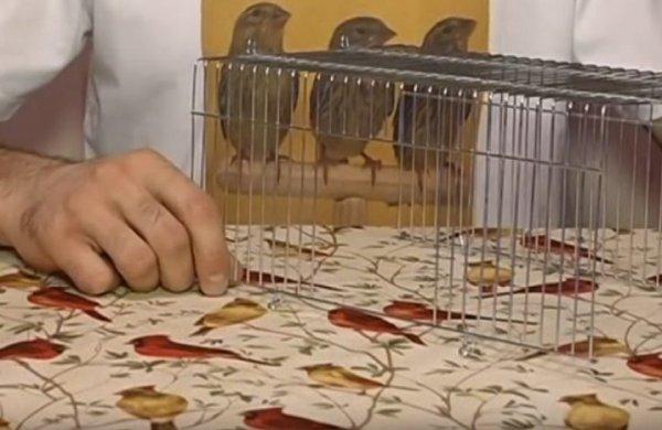 Переноска для попугая: зачем нужна, какую выбрать, как ...