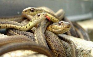 Африканские змеи: 10 самых ядовитых и опасных