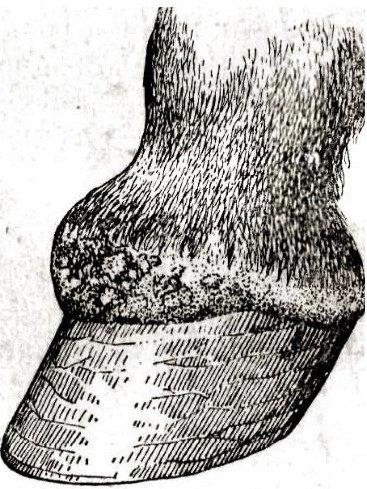 Dureri De Sus De Articulație Degetul Mare - Durere in cot - natura, cauzele, tratamentul