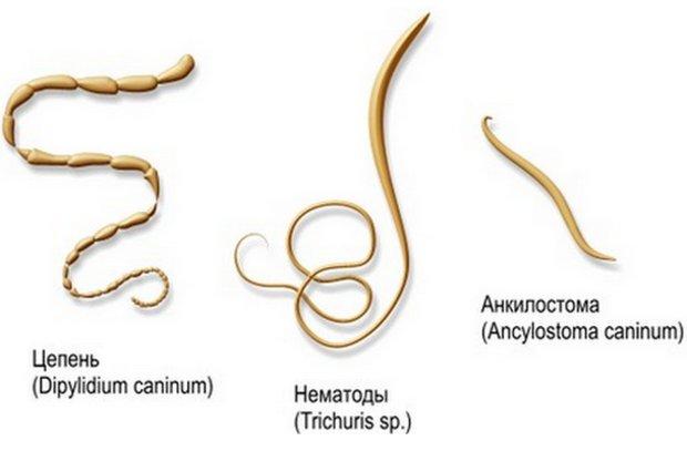 a férgek fejfájást okoznak e miért viszket a paraziták