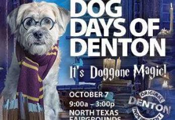 Dog Days of Denton TX