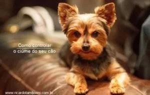 Como controlar o ciúme do seu cão