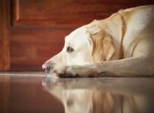 Tudo sobre soluço canino. – Mãe de Cachorro também é mãe