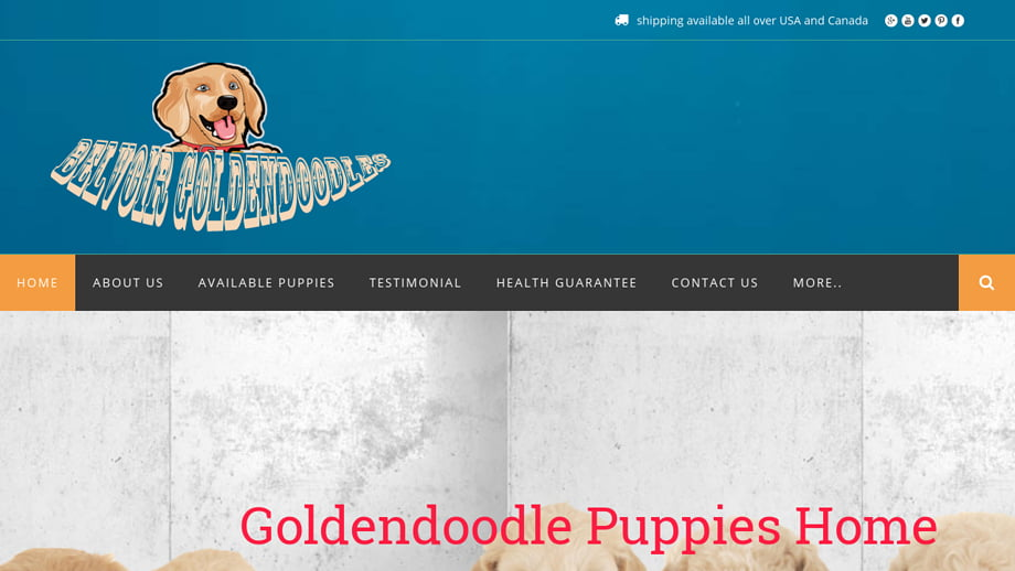 Pet Scam Website: Belvoirdoodles.com Belvoir Goldendoodles Puppies ...