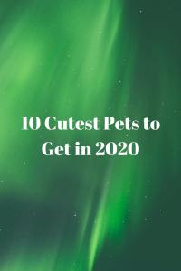 10 mascotas más lindas en 2020