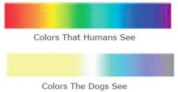 狗 貓 色盲